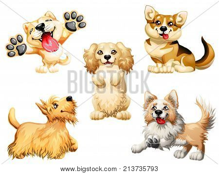 The Set the darling dogs breed Cocker Spaniel, Border Collie, Welsh Corgi, Scottish Terrier, Akita Inu color red, yellow and brown. A cartoon vector illustration isolated on white.