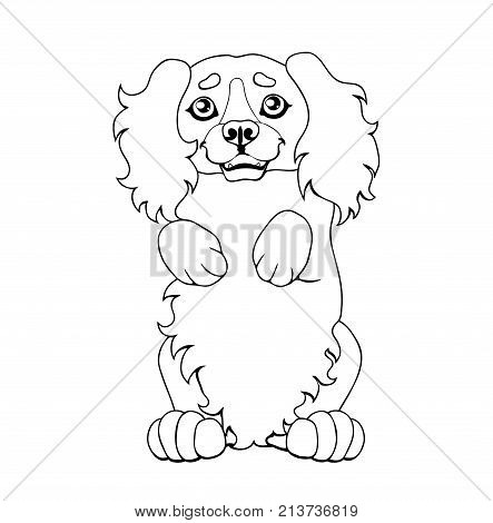 The darling puppy light-red Cocker Spaniel costs on hinder legs. A contour line vector illustration separately on white, page coloring book, square.