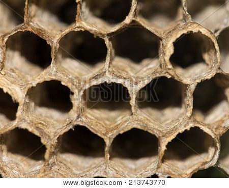 honeycombs of bees. macro . In the park in nature