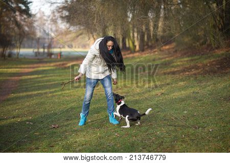 Young woman trains the dog in the autumn park. She cheerfully plays with a pet. The vigorous dog with pleasure executes commands.