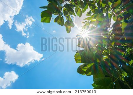 Looking up at sun burst behind tree leaf with cloud and blue sky in nice weather day