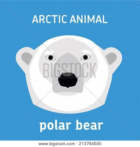 Animals of the Arctic. The head of a polar bear. Vector Set of polar mammals. Flat style illustration