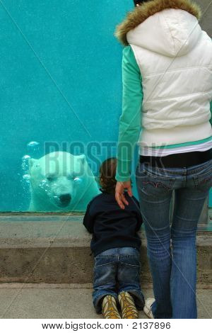 Mother And Son Watching Bear