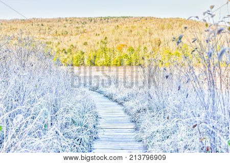 Frost White Winter Landscape With Bushes, Boardwalk And Morning Sunlight In Cranberry Wilderness Gla
