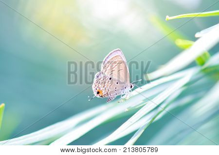 Closeup of butterfly on leaves (common butterfly)