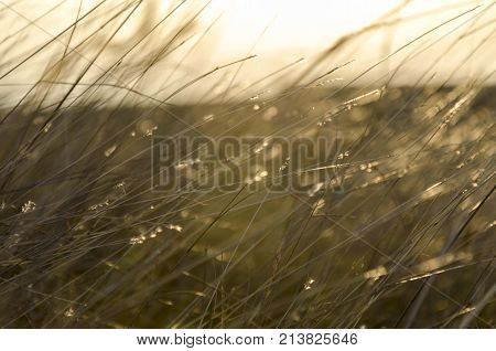 nature tall grass leaves. nature plants grass