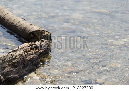 river lake shallow with rocks and fallen wood tree