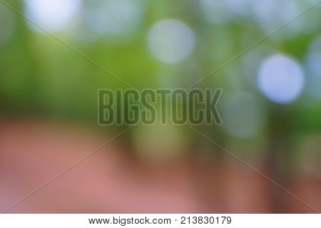 Abstract Nature Green Boke Background. Blurred The Leaves, The Sun, The Sky In Summer