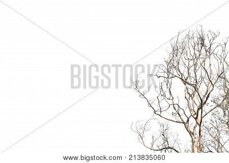 Dead tree isolated on background. Old dry dead tree without bark and stump.