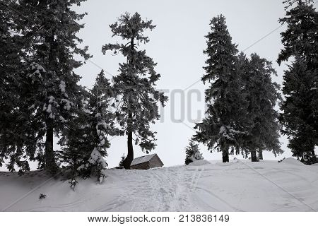Old Frosty Wooden Hut And Snow-covered Forest In Winter Snow Mountains