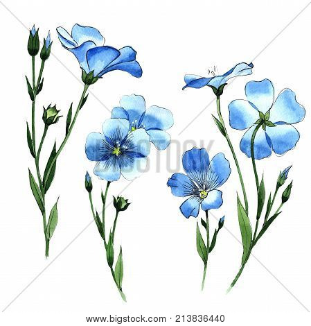 Wildflower flax in a watercolor style isolated. Full name of the plant: flax . Aquarelle wild flower for background, texture, wrapper pattern, frame or border.