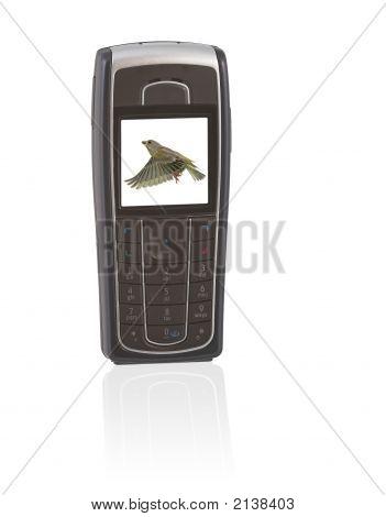 Mobil_Bird