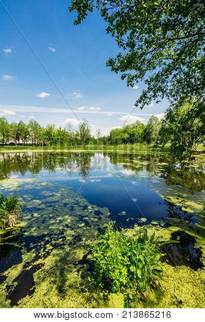 Lake in the summer countryside with duckweed and marsh grass against the blue sky background