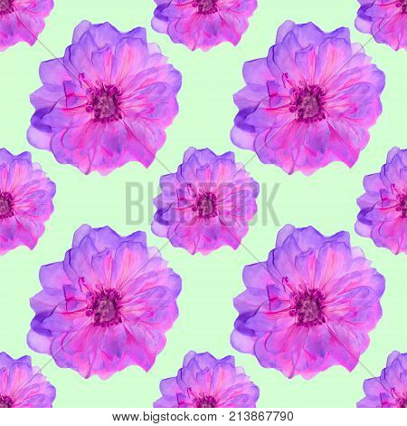 Briar wild rose. Texture of flowers. Seamless pattern for continuous replicate. Floral background photo collage for production of textile cotton fabric. For use in wallpaper covers
