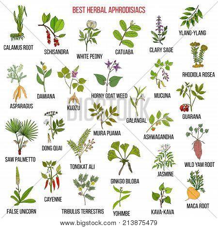 Best natural herbal aphrodisiacs. Hand drawn vector set of medicinal plants