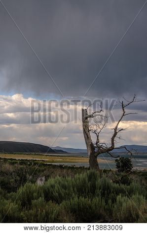 Dead Trees and classic sand stone formations, known as Tufa, higlighted along the coast line of Mono Lake, near the town of Lee Vining, in Eastern California