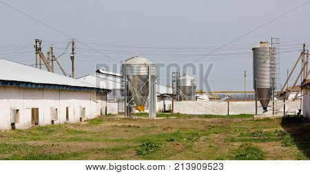 Chicken farm with four grain storage silos for the storage of poultry feed
