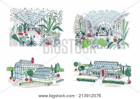 Collection of sketches of large greenhouses full of tropical plants. Set of rough drawings of glasshouses with palm exotic trees growing in pots. Inside and outside views. Colored vector illustration