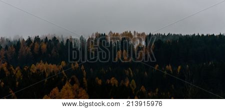 hill view in the alps in autumn with fog