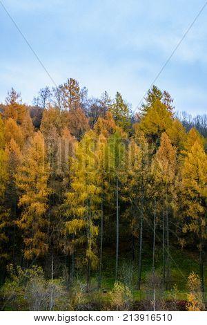 trees colored in autumn colors in austria