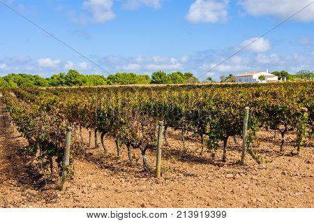 Vineyards In The Countryside In Formentera, Spain