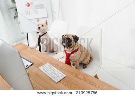 Business Dogs In Neckties