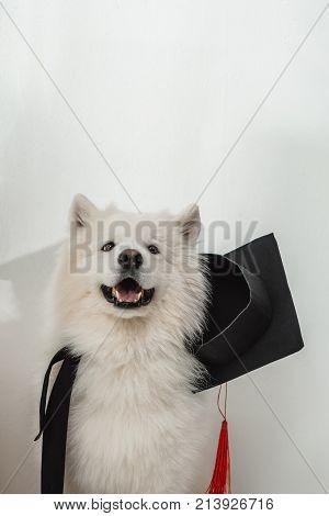 Dog In Graduation Hat