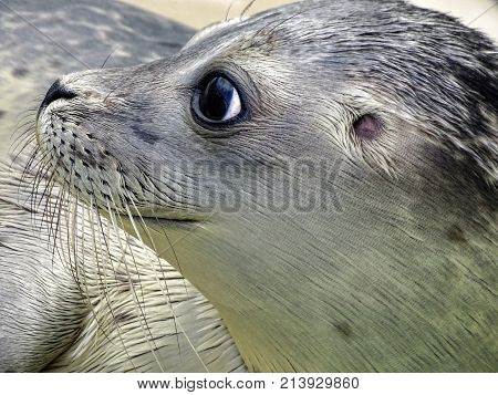 Seal Fish is looking great with its eye