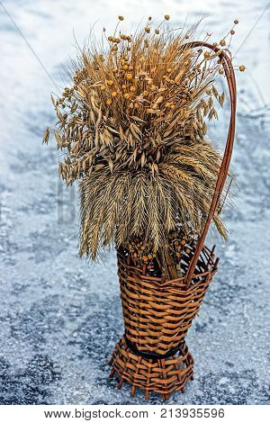 old wooden vase with a dry wheat bouquet on ice and snow