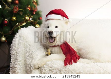 White Dog In A Red Scarf And Hat.