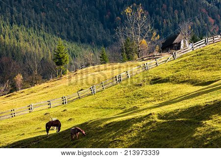 Horses On A Grassy Hillside Near The Village