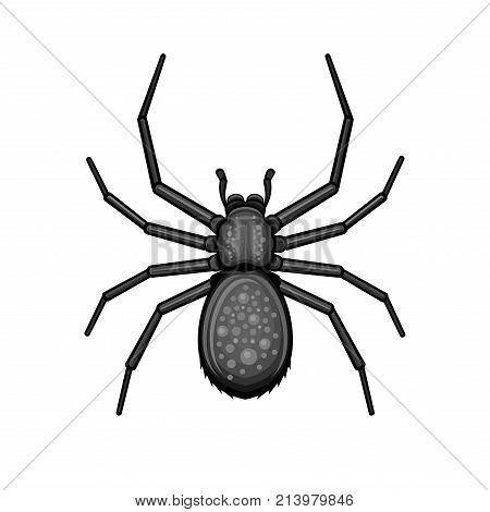 Spider Black Arachnid on White Background. Vector illustration