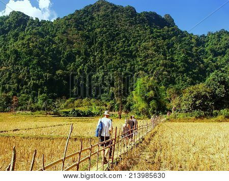 People walking through harvested rice field near Vang Vieng Laos. Vang Vieng is a popular destination for adventure tourism in a limestone karst landscape.
