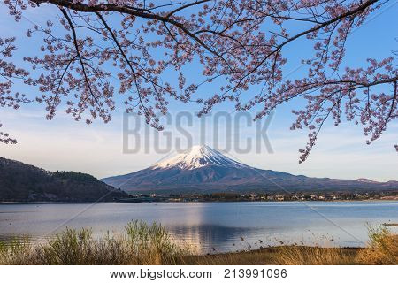 Mt. Fuji, Japan from Lake kawaguchi in spring.