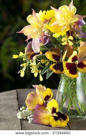 bouquet of flowers pansies in a jar of glass and aquilegia pink