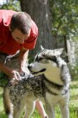 young man washes in Siberian Husky dog in the backyard - foam shampoo on dog's ear and neck poster