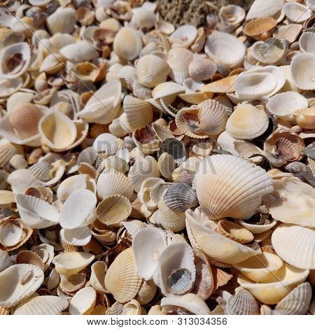 A Random Jumble Of Small Coloured Shells Are Washed Up On The Beach Just Waiting To Be Found And Sor