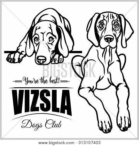Vizsla - Vector Set Isolated Illustration On White Background