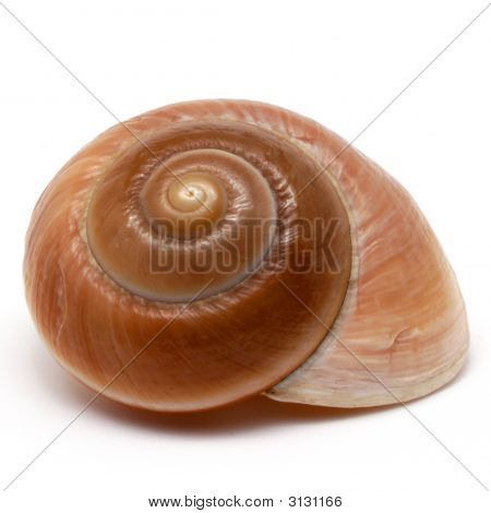 Spiral seashell isolated on white background close-up poster