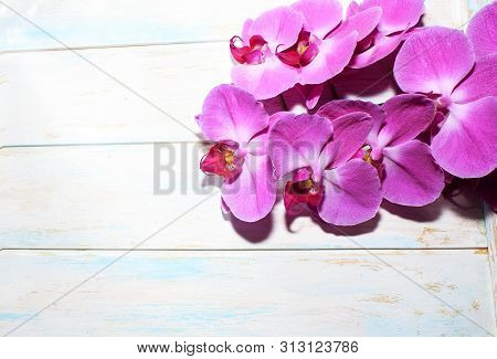 Pink Orchid (phalaenopsis) Brench On A Wooden Background. Beautiful Indoor Flowers Close-up. Gift.