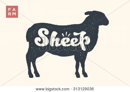 Sheep. Lettering, Typography. Animal Silhoutte Sheep, Lamb