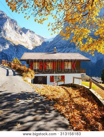 Amazing autumn landscape in Switzerland mountains. Traditional wooden house and yellow leaves in Grindelwald village, Swiss Alps