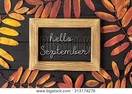 Hello September Lettering Card. Concept Of The Fall Season