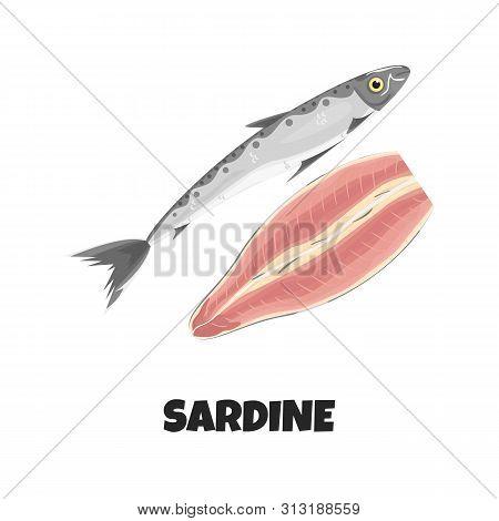 Vector Realistic Illustration Of Fillet Of Sardine. Concept Design Of Raw Fresh Sardine Fish Isolate