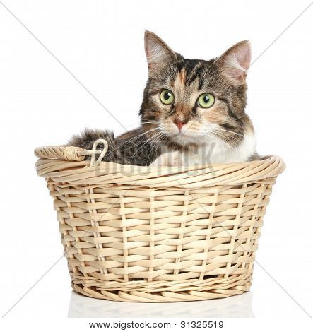 Mixed-breed cat resting in wattled basket on a white background poster
