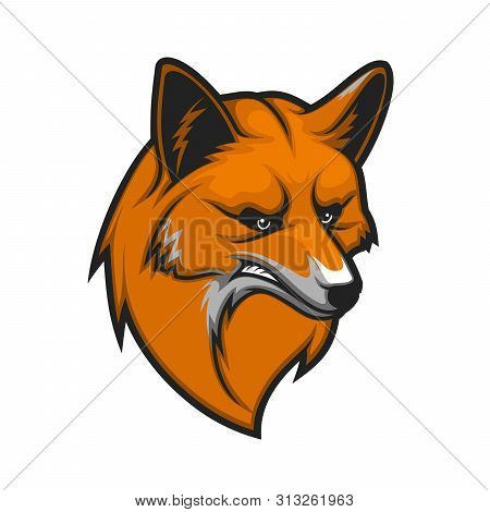 Fox Head Isolated Mascot Icon. Vector Snout Or Muzzle Of Angry Red Fox Animal Hunter, Wild Canine Pr
