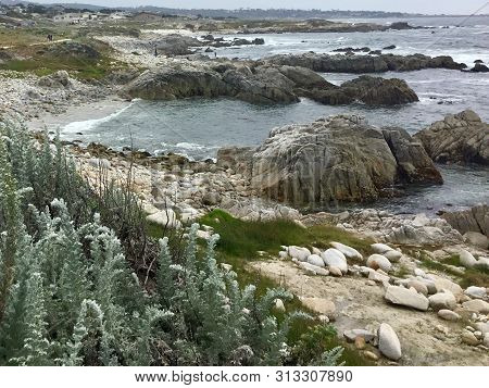 View Of Coastline At Asilomar State Beach In Pacific Grove, California With Wildflowers In Foregroun