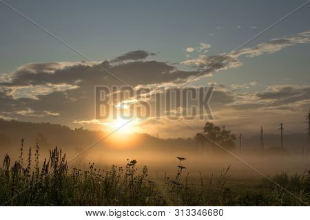 Walk Through The Crepuscular Area. Sunrise In A Field With Lots Of Vegetation, Beautiful Wild Flower