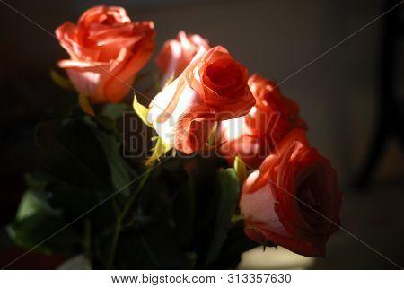 A Bouquet Of Several Orange Roses, Dark Fone