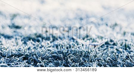 Close-up Of The Grass In The Frost At The Beginning Of Winter And The End Of Autumn In The Sunlight
